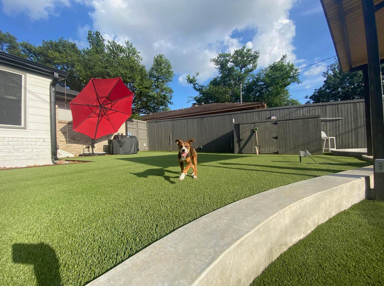 dog relaxing on artificial grass