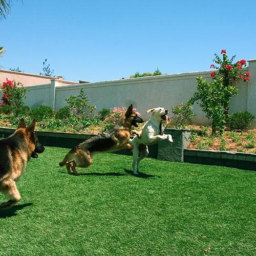 Pet Grass