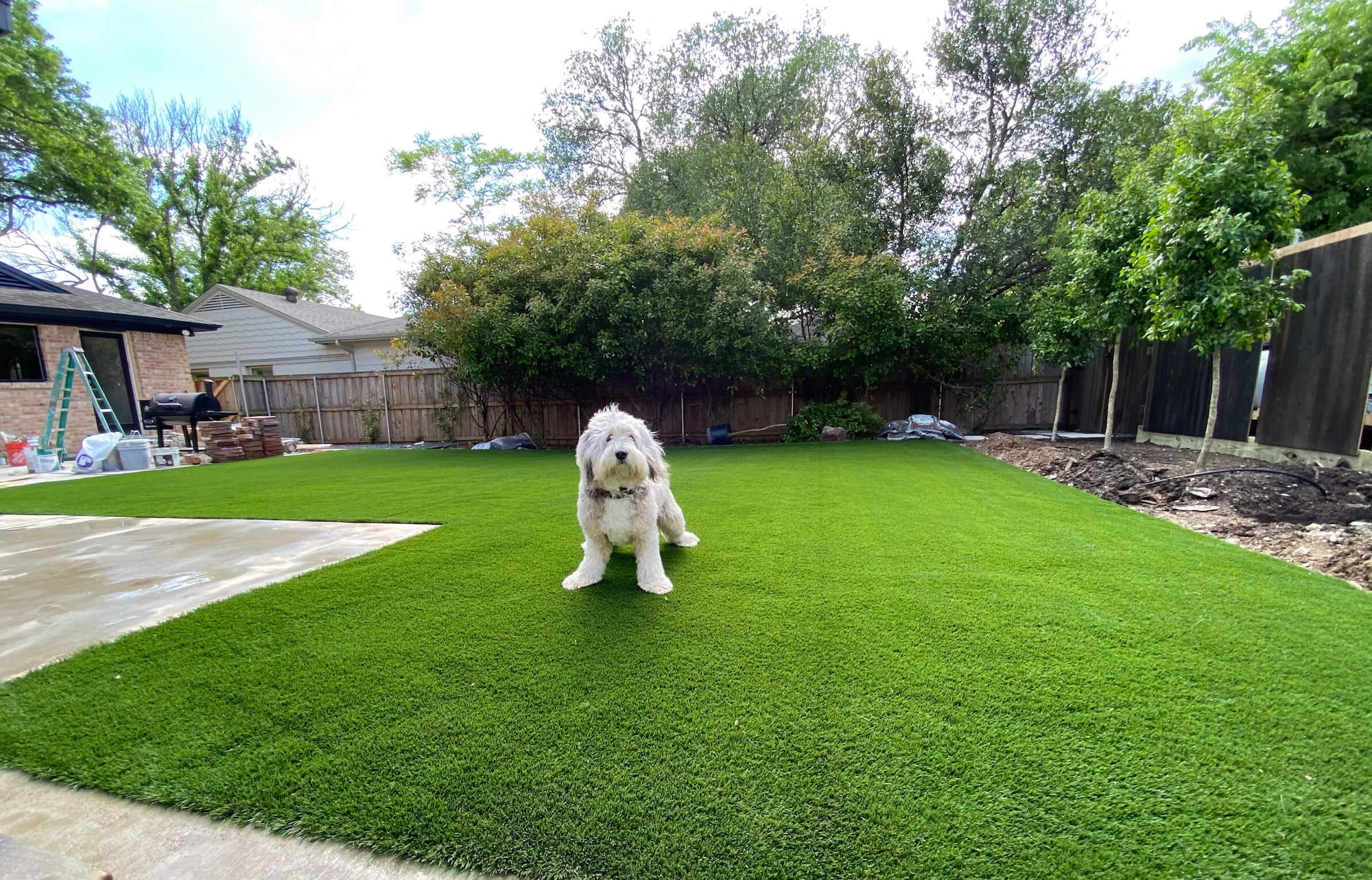 dog relaxing on artificial turf