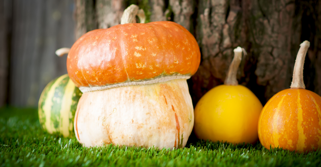 Decorative pumpkins displayed on artificial turf for fall.
